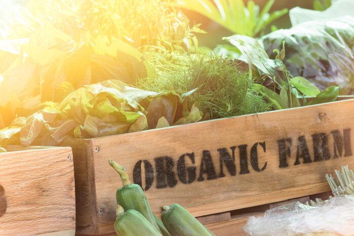 basket of organic food crops